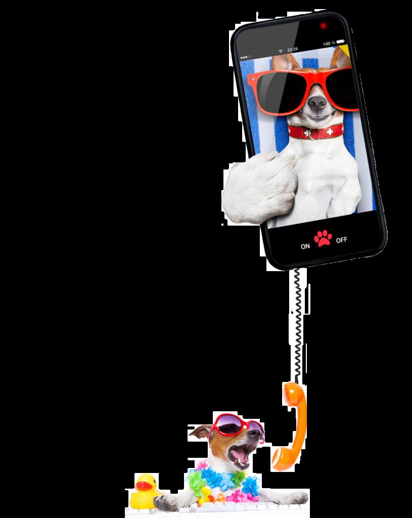 CHIEN TEL + SMARTPHONE
